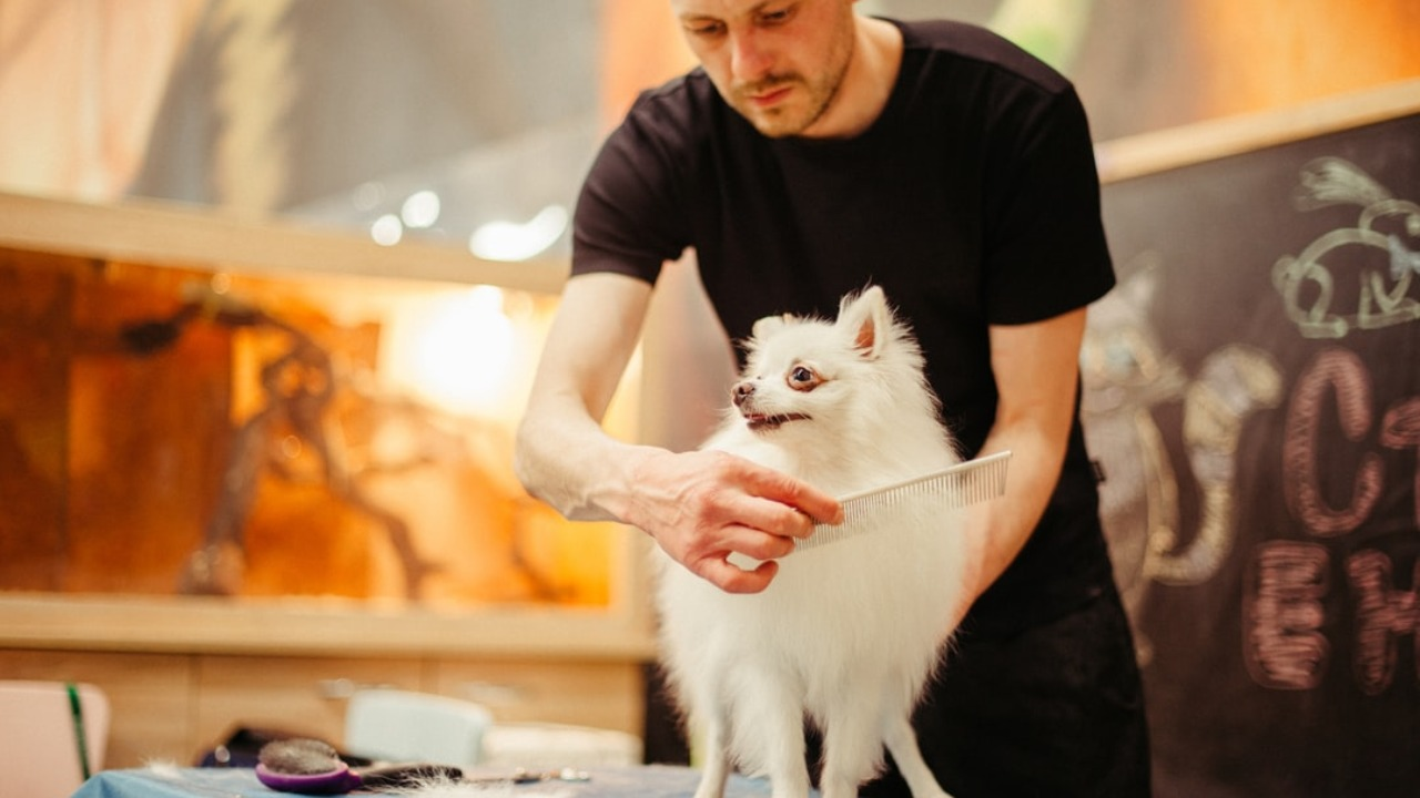 Why Dog Grooming is Important