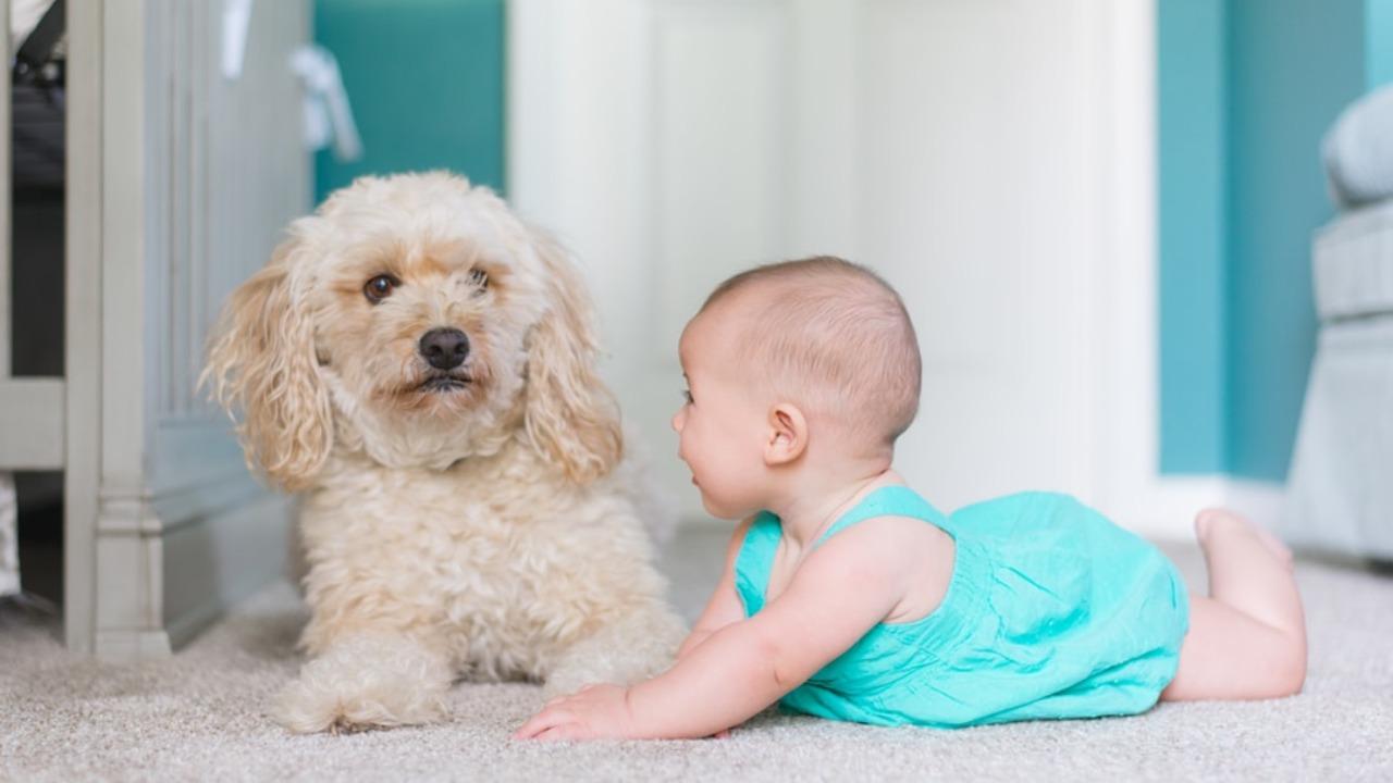 Eliminating Dog Odors on Carpets