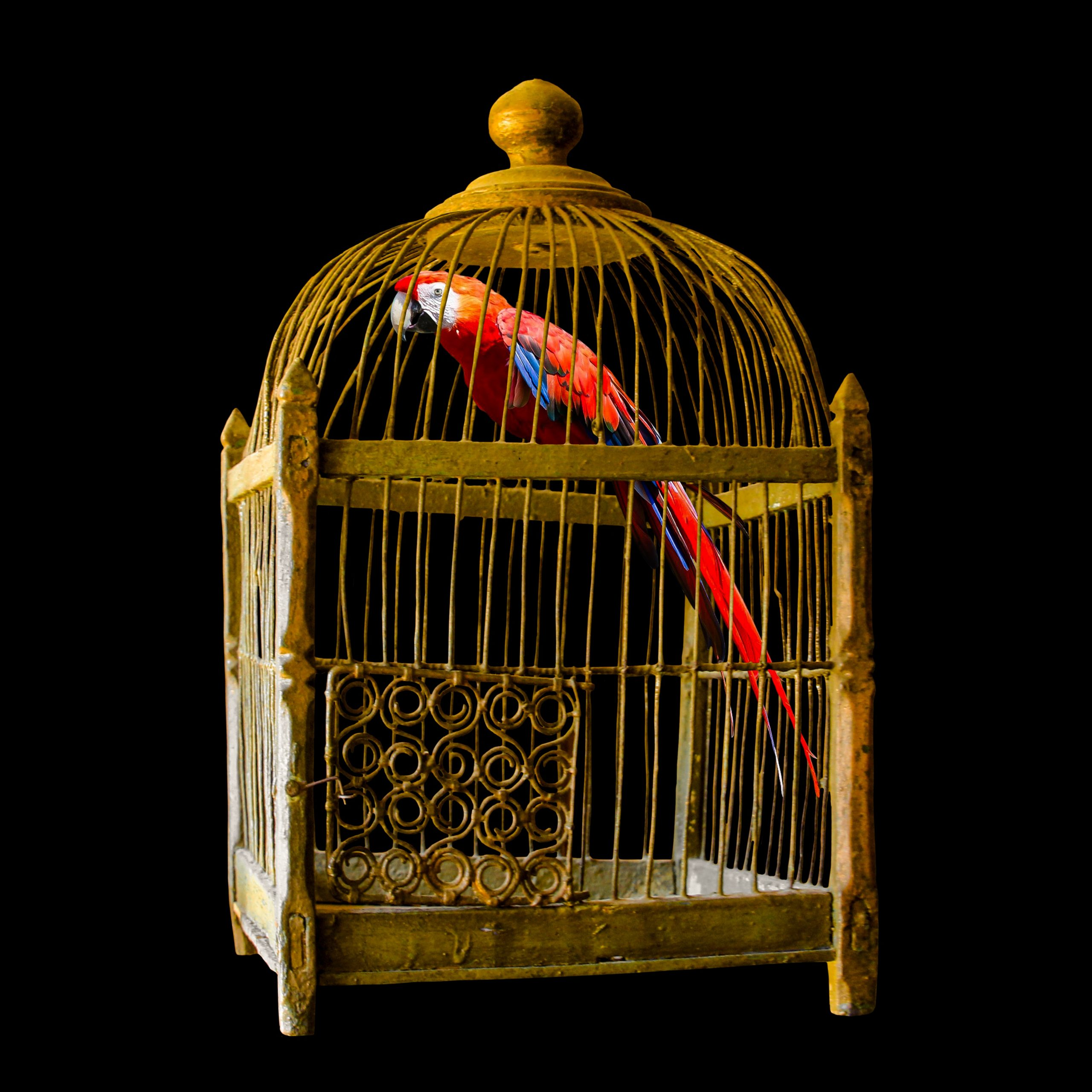 Guide To Installing A Bird Cage