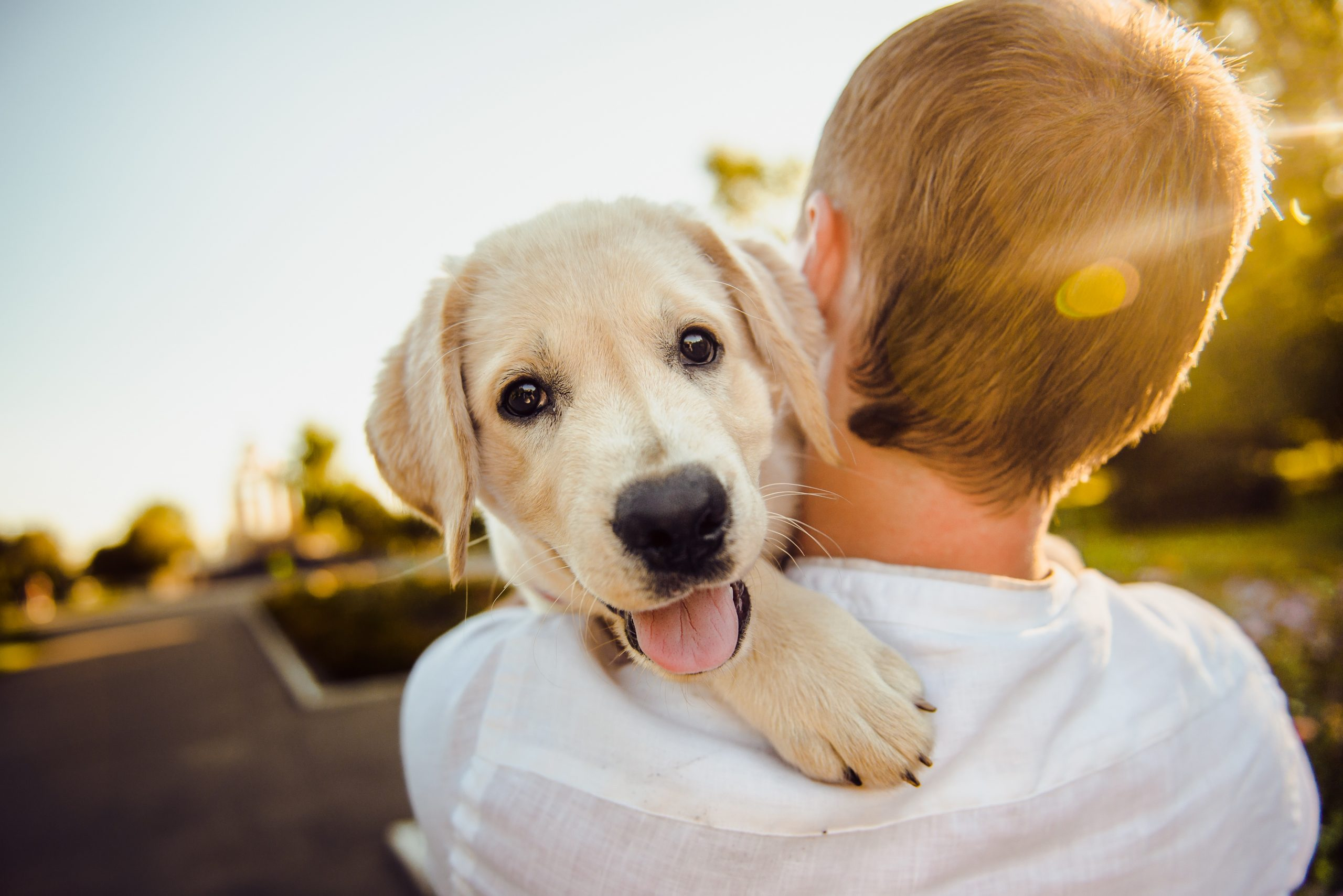 Why Your Dog Understands You More Than You Think