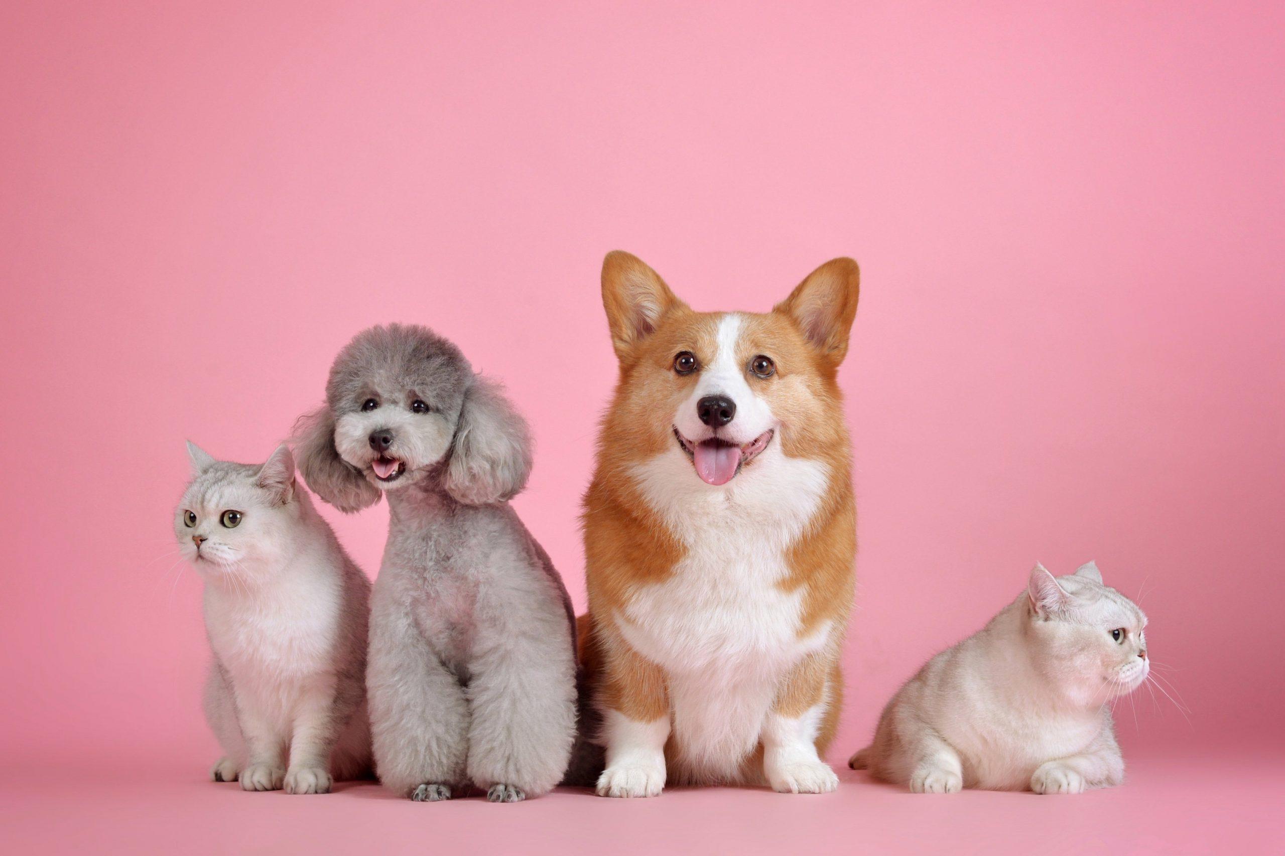 Pet Sitting Customer Reviews and Testimonials