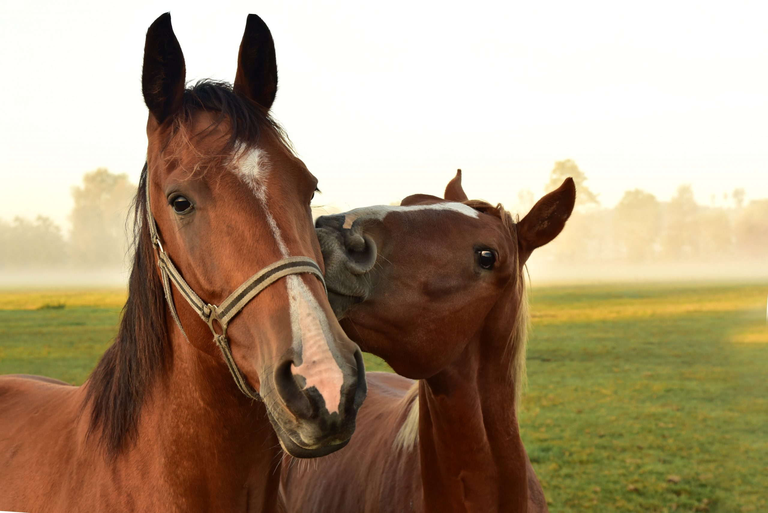 Stress and Your Horse's Brain