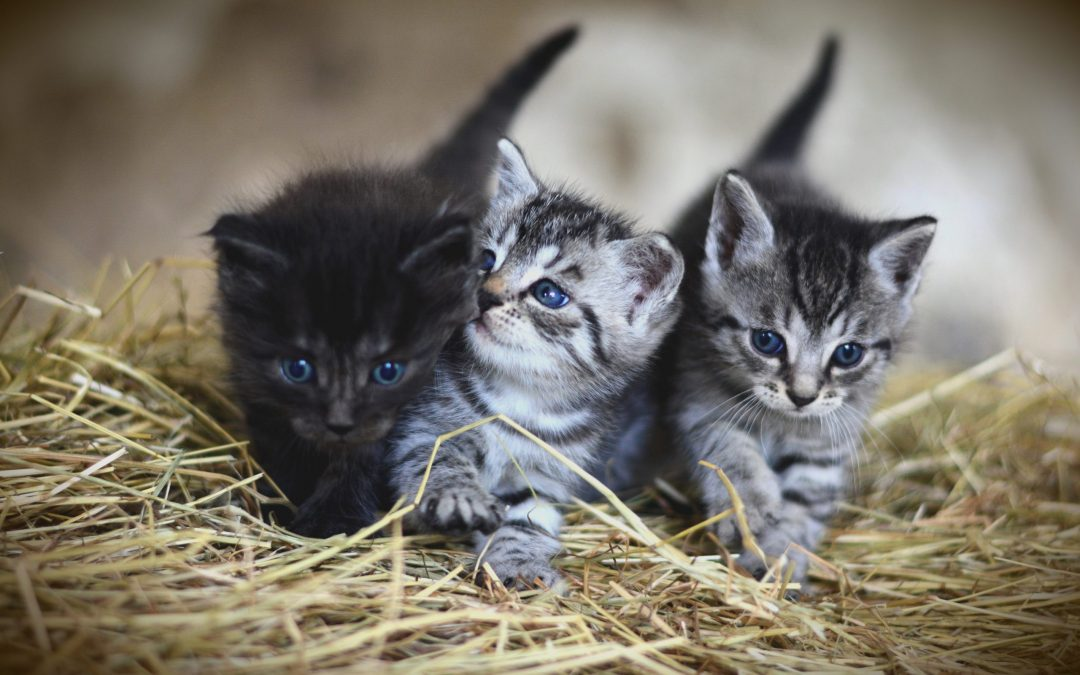 What Are the Differences Between Domestic and Wild Cats