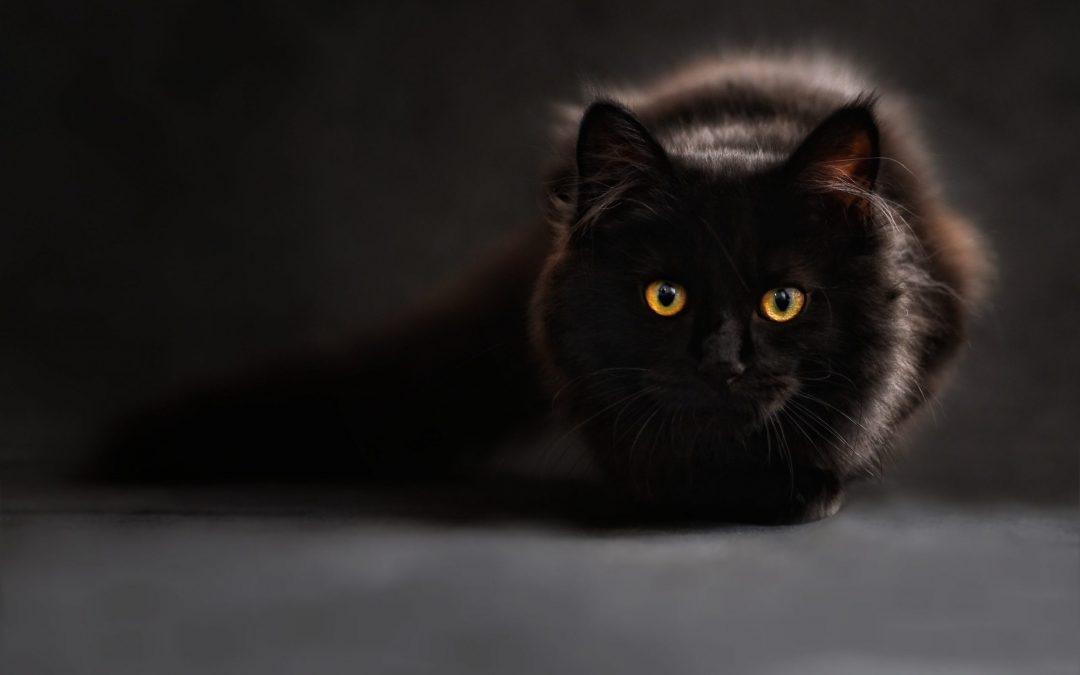 5 Symptoms of Cat Poisoning