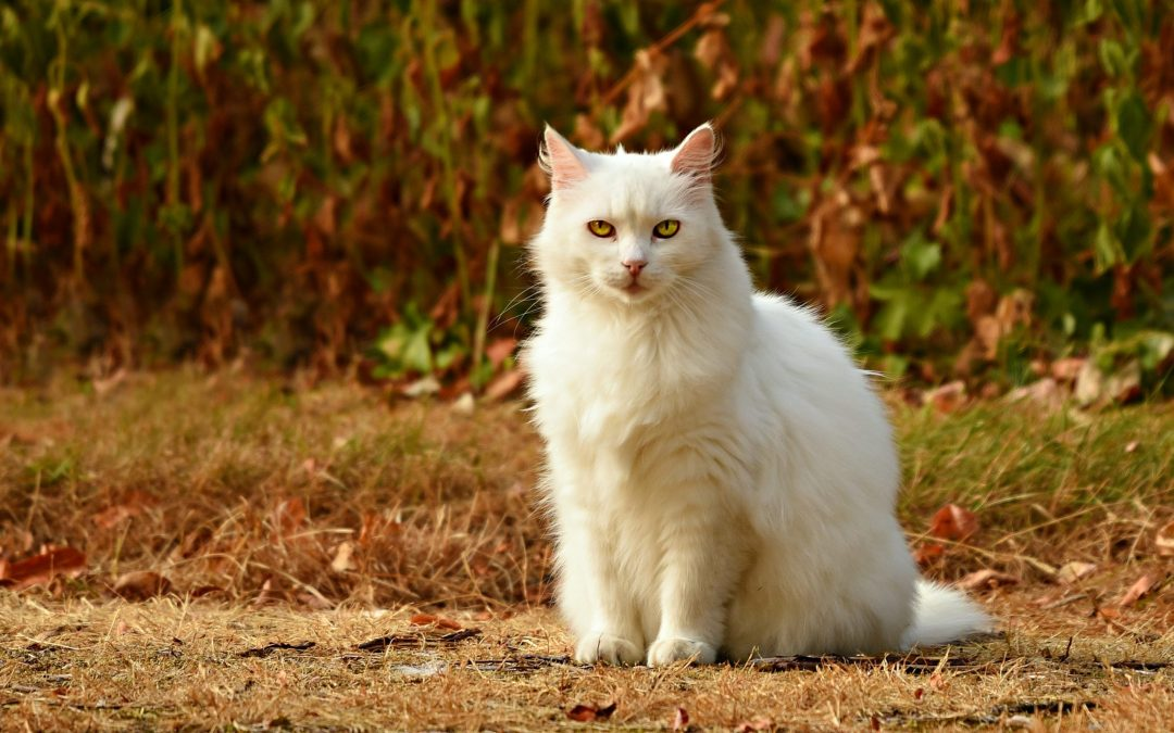 Helpful Advice on Caring for Senior Cats
