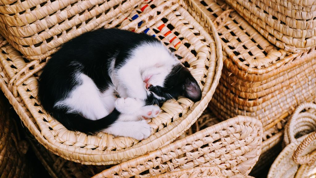 Why Do Cats Curl Up Into a Ball When Sleeping?